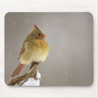 Female northern Cardinal on snow covered Mouse Pad
