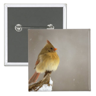 Female northern Cardinal on snow covered Pinback Button