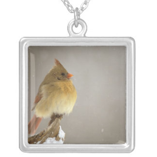 Female northern Cardinal on snow covered Silver Plated Necklace
