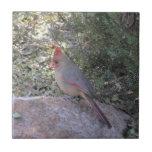 Female Northern Cardinal Tile