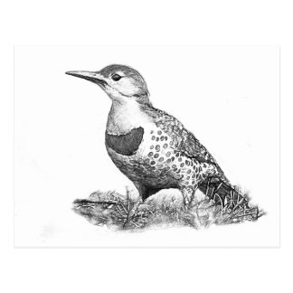 Female Northern Flicker Postcard