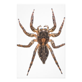 Female Pantropical Jumping Spider Stationery