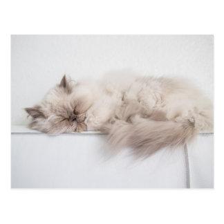 Female Persian Cat Postcard