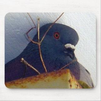 Female Pigeon 1 Mousepad