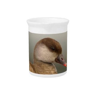 Female pochard duck, netta rufina drink pitcher