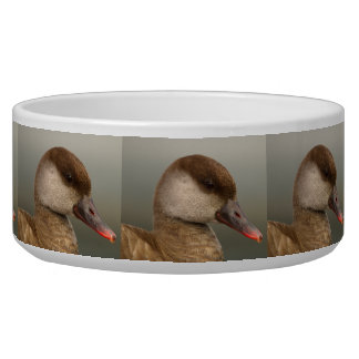 Female pochard duck, netta rufina, portrait bowl