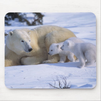 Female Polar Bear Lying Down with 2 coyscubs Mouse Pads