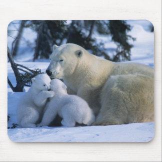 Female Polar Bear Lying Down with 2 Cubs Mousepad