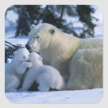 Female Polar Bear Lying Down with 2 Cubs Square Sticker