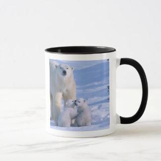 Female Polar Bear Standing with 2 Cubs at her Mug