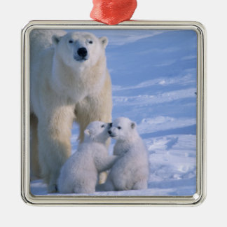 Female Polar Bear Standing with 2 Cubs at her Square Metal Christmas Ornament