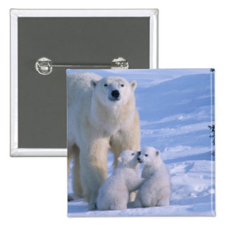Female Polar Bear Standing with 2 Cubs at her Pinback Button