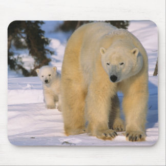 Female Polar Bear Standing with one cub or coy Mouse Pad