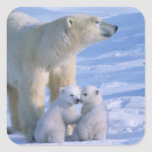 Female Polar Standing with two 3 month old Square Sticker