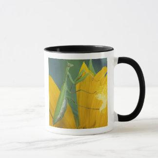 Female praying mantis with egg sac on mug