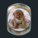 "Female Puppy - Dogue De Bordeaux Puppy Jelly Belly Candy Jar<br><div class=""desc"">female puppy - dogue de bordeaux puppy wearing princess dress isolated on white background - 5 weeks old &#169; and &#174; Bigstock&#174; - All Rights Reserved.</div>"
