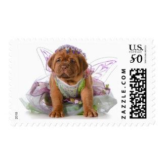 Female Puppy - Dogue De Bordeaux Puppy Postage