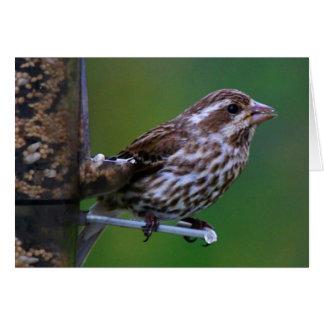 Female Purple Finch Card
