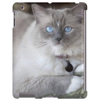 Female Ragdoll Cat