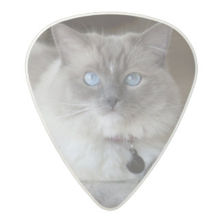 Female Ragdoll Cat Acetal Guitar Pick