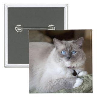 Female Ragdoll Cat Pinback Buttons