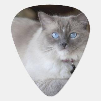 Female Ragdoll Cat Guitar Pick