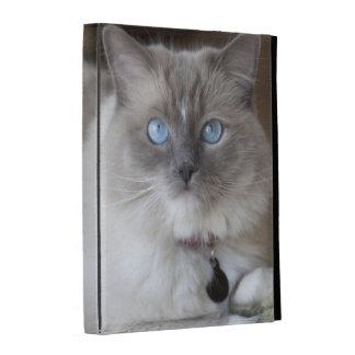 Female Ragdoll Cat iPad Cases