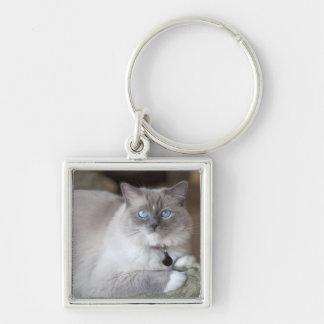 Female Ragdoll Cat Silver-Colored Square Keychain