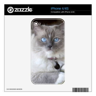 Female Ragdoll Cat Skins For The iPhone 4S