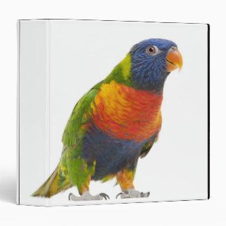 Female Rainbow Lorikeet - Trichoglossus Binder