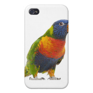 Female Rainbow Lorikeet - Trichoglossus Case For iPhone 4