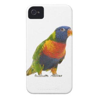 Female Rainbow Lorikeet - Trichoglossus iPhone 4 Case-Mate Case
