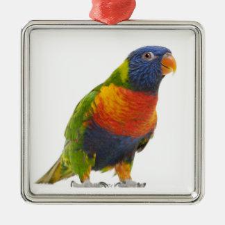 Female Rainbow Lorikeet - Trichoglossus Metal Ornament
