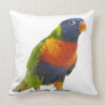 Female Rainbow Lorikeet - Trichoglossus Throw Pillow