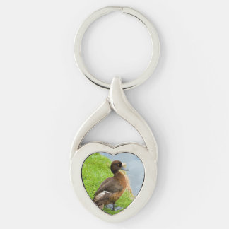 Female reddish Brown Tufted Diving Duck in grass Keychain