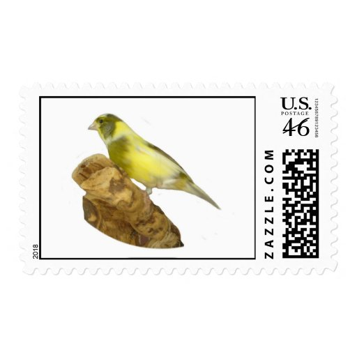 Female roller canary postage stamp