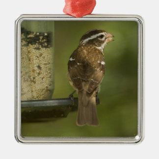Female) Rose-breasted grosbeak at feeder, Metal Ornament