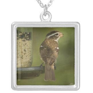 Female) Rose-breasted grosbeak at feeder, Square Pendant Necklace