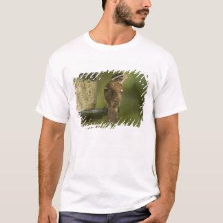 Female) Rose-breasted grosbeak at feeder, T-Shirt