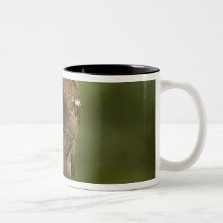 Female) Rose-breasted grosbeak at feeder, Two-Tone Coffee Mug