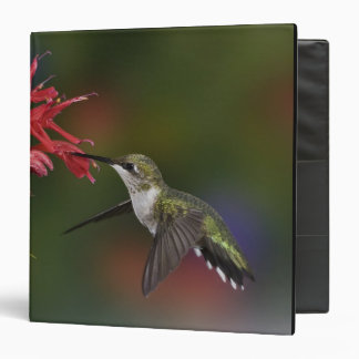 Female Ruby-throated Hummingbird feeding on Vinyl Binders