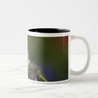 Female Ruby-throated Hummingbird feeding on Two-Tone Coffee Mug