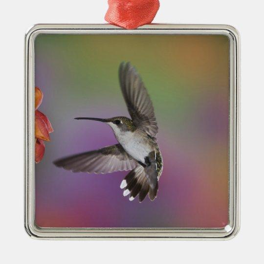 Female Ruby Throated Hummingbird in flight, 2 Metal Ornament