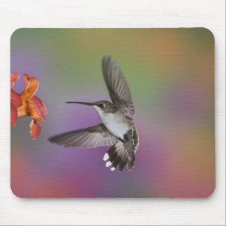 Female Ruby Throated Hummingbird in flight, 2 Mouse Pad