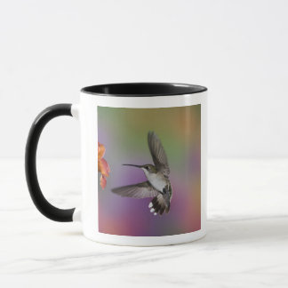 Female Ruby Throated Hummingbird in flight, 2 Mug