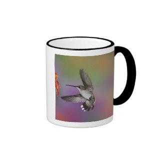Female Ruby Throated Hummingbird in flight, 2 Ringer Coffee Mug