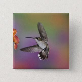 Female Ruby Throated Hummingbird in flight, 2 Pinback Button