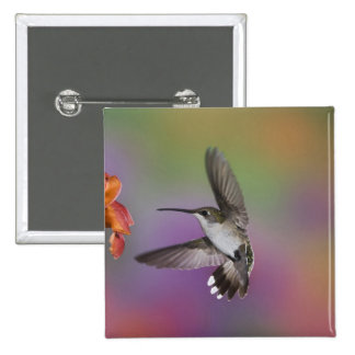 Female Ruby Throated Hummingbird in flight, 2 Pinback Button