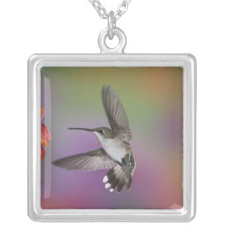 Female Ruby Throated Hummingbird in flight, 2 Silver Plated Necklace
