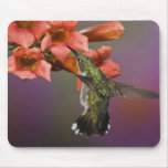 Female Ruby Throated Hummingbird in flight, Mouse Pad